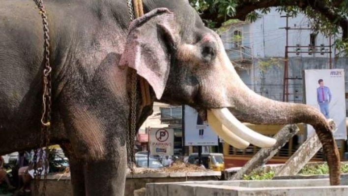 سانغيتا وثقت حالة فيل أصيب خرطومه بالشلل