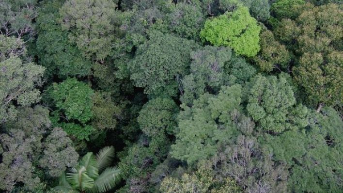 Canopy da floresta, Amazon (Imagem: Kyle Dexter)