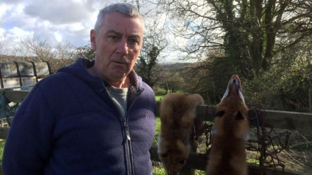 Fur trade: Trapper defends killing foxes in rural Wales