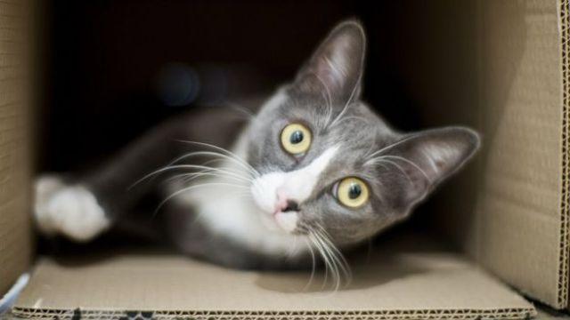 Um gato dentro de uma caixa de papelão
