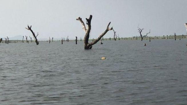 Des feuillus africains submergés dans le lac Volta au Ghana