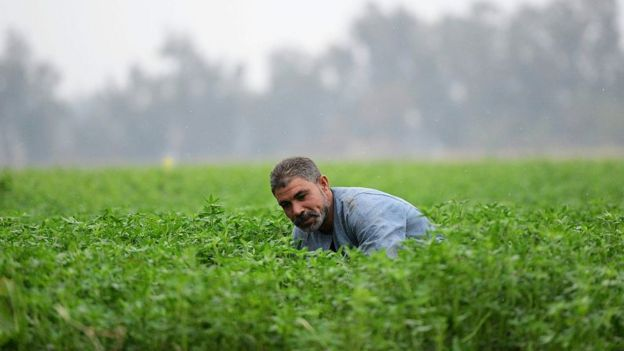 Man in the middle of a green field