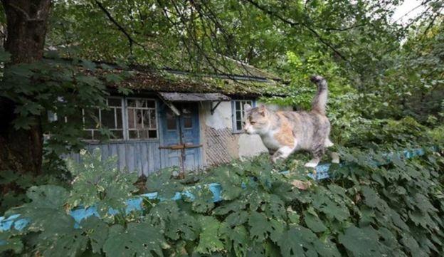 Gato en Chernóbil