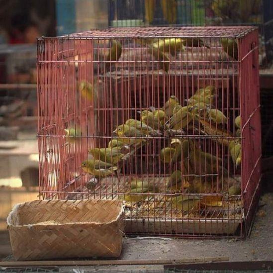 Aves enjauladas en venta