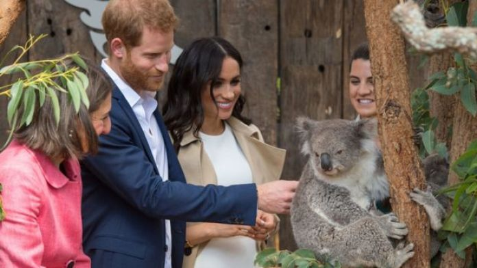 Prince Harry, Meghan and a koala