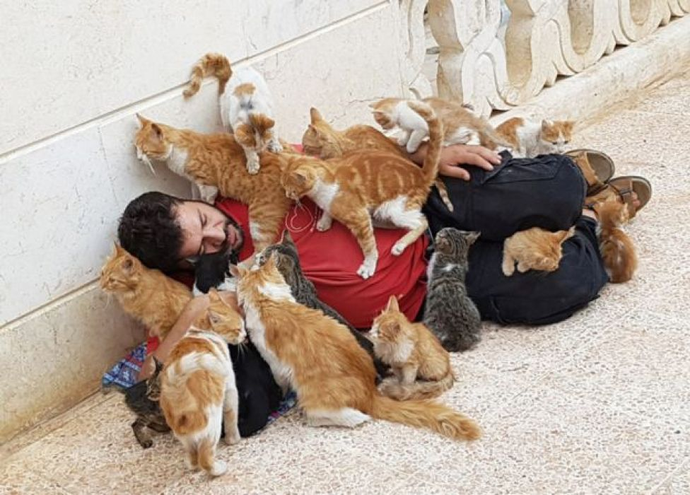 Alaa covered by cats