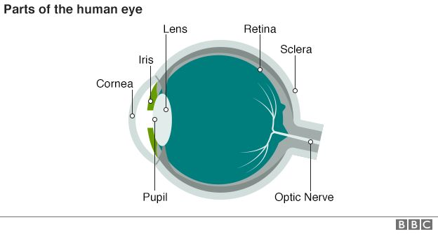 Diagram of a cross-section of the human eye