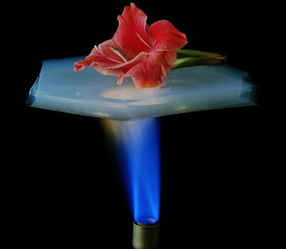 Flor sobre aerogel con llama debajo