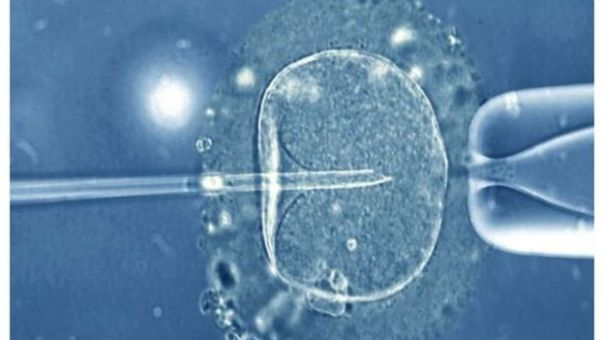 Fecundación de óvulo