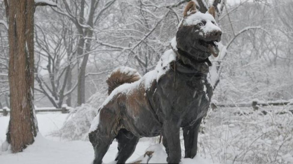Estátua de Balto, em Nova York (EUA)