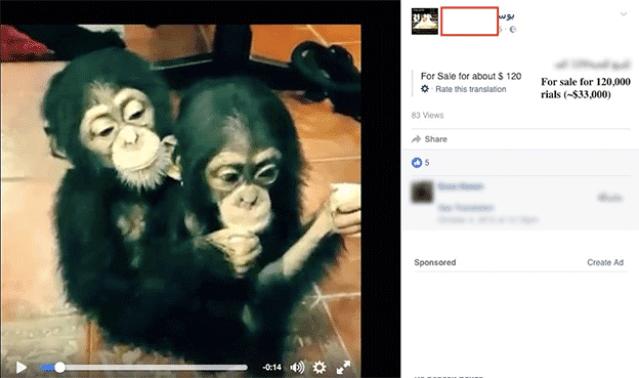 Chimpanzés à venda em rede social