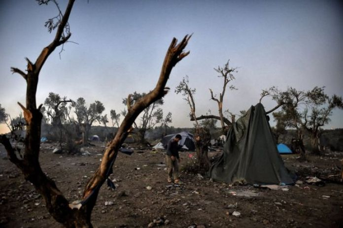 bare trees and barren earth, a makeshift tent, November 2015