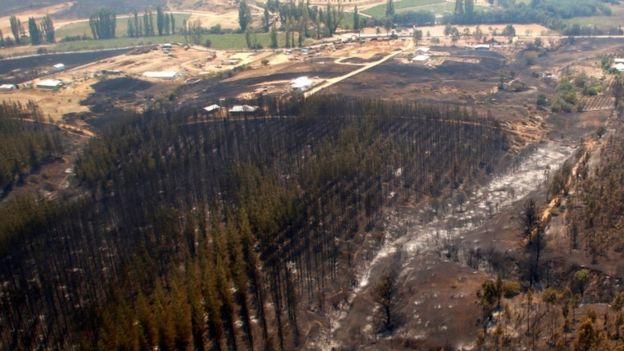 Forest area devastated by fire in Cauquenes in the Maule region of Chile, 21 Jan 17