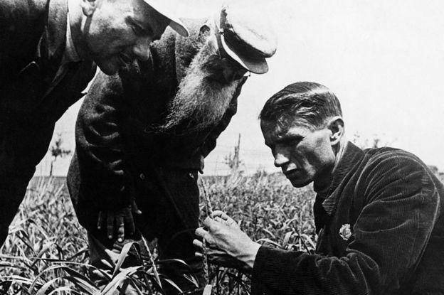 O geneticista soviético e engenheiro agrônomo Trofim Lysenko mede o crescimento do trigo em um campo agrícola coletivo perto de Odessa, na Ucrânia.