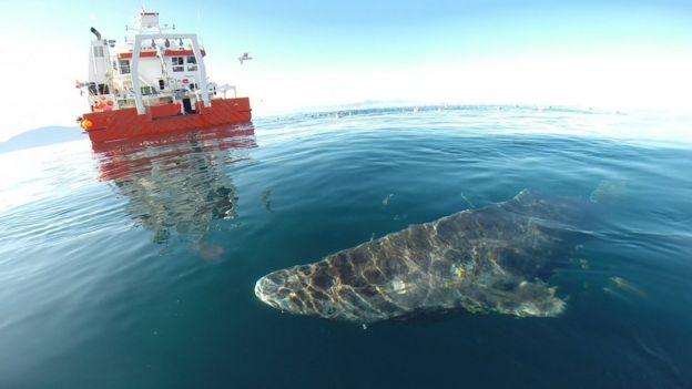 Tiburón y barco científico