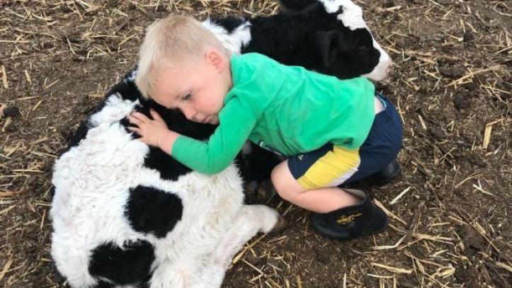 Ashley Gamble's son cuddles next to a cow on their farm