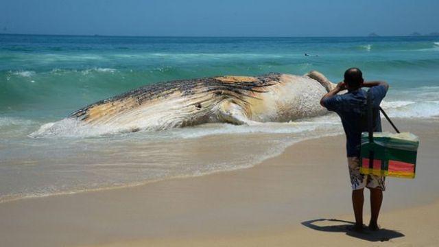 Corpo de baleia morta encalha na Praia do Arpoador, em Ipanema, na zona sul do Rio em novembro de 2017