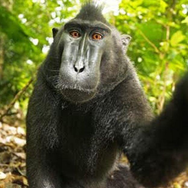 自撮りしてみる猿
