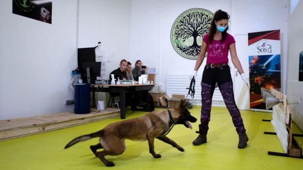 Fransa'da koronavirüsü tespit etmesi için eğitilen köpekler