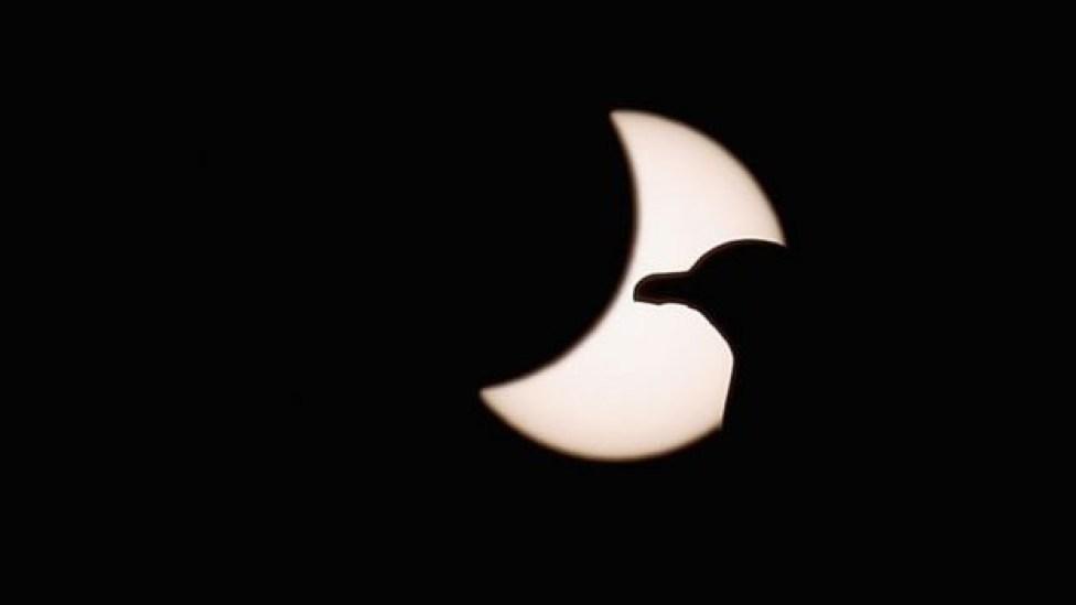 107584316 bird - Eclipse solar: 4 mudanças que o fenômeno causa na Terra