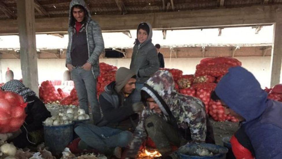 Soğan işçileri