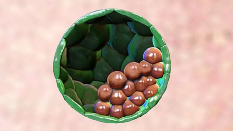 Representation of the synthetic embryo