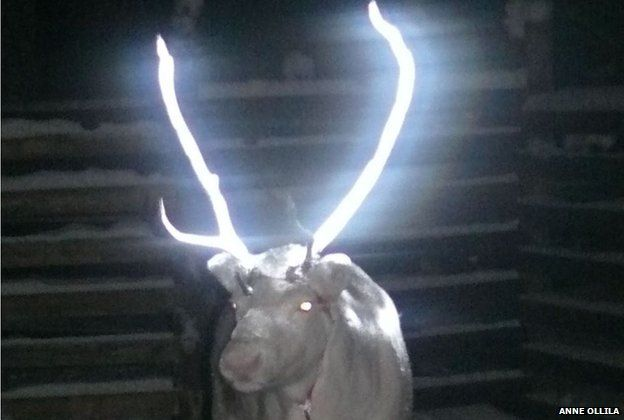 Reindeer treated with reflective substance