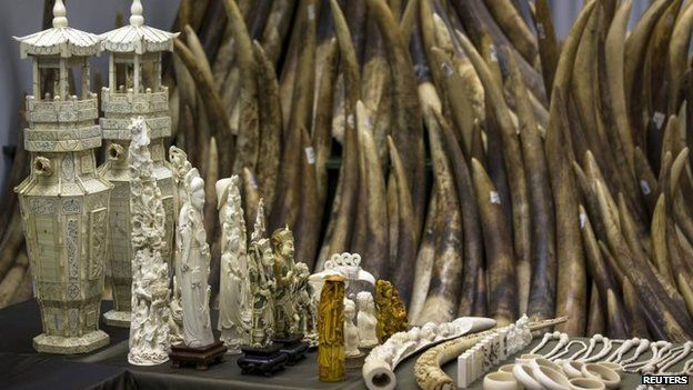 Ivory tusks and products are displayed after the official start of the destruction of confiscated ivory in Hong Kong 15 May 2014