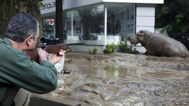A man shoots a tranquilizer dart to put a hippopotamus to sleep at a flooded street in Tbilisi, Georgia, 14 June 2015