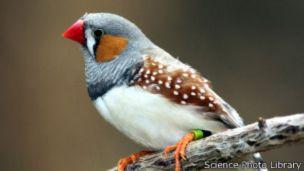 جسامت میں کمی اور بال و پر جیسی خصوصیات پیدا کرنے سے پرندوں کو اپنی نسلوں کی بقا میں مدد ملی