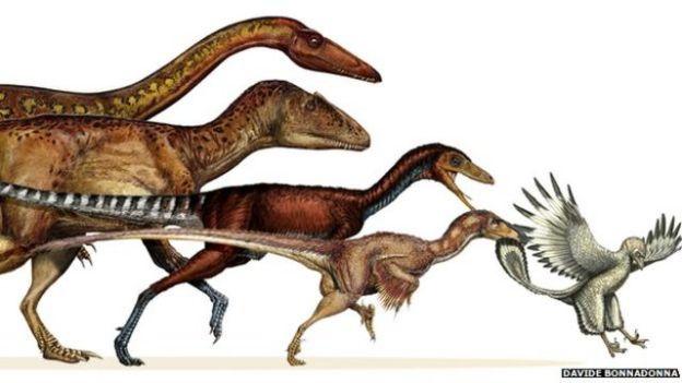 جسمانی خصوصیات کے تجزیے سے ظاہر ہوا کہ تھیروپوڈ کی جسامت میں کمی قدیم ترین پرندے آرکی اوپٹیرکس سے پانچ کروڑ سال پہلے شروع ہوئی تھی