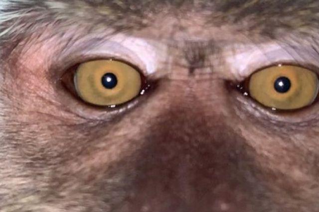 원숭이가 찍은 것으로 추청되는 동영상 캡처