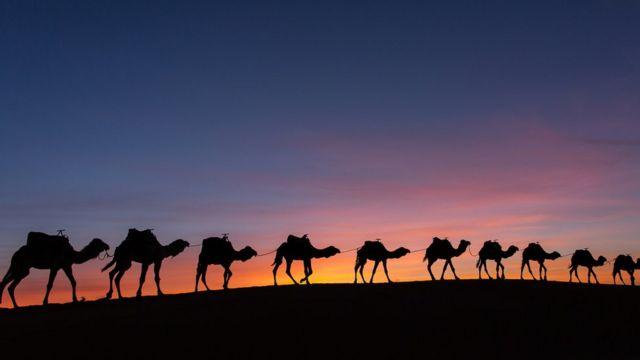 উটের কাফেলা আরবের বিভিন্ন শহরের মধ্যে পণ্য আনা-নেয়া করতো
