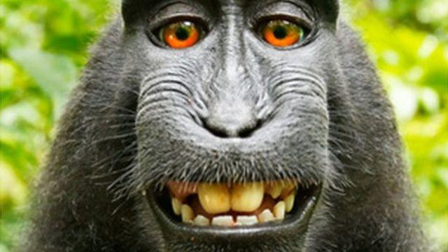 앞서 2011년 원숭이 셀카 사진은 저작권 논란으로 소송으로까지 확대됐다