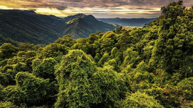 Floresta na Austrália