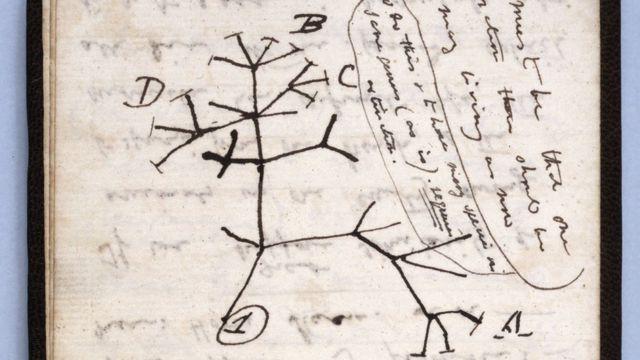 """В одному зі зниклих записників - відомий малюнок """"древа життя"""""""