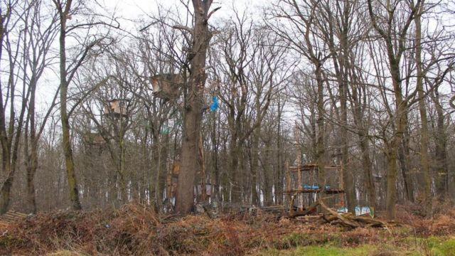 Bosque en Manheim.