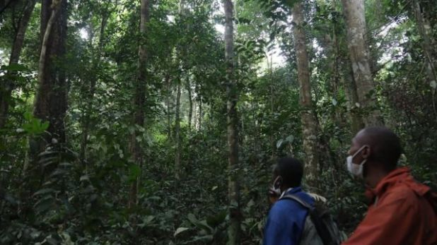 على الرغم من وجود أدلة تثبت أن الامتيازات تساعد في الإدارة المستدامة للغابات، فإن عملية الحصول عليها معقدة وباهظة