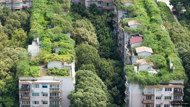 A vegetação ajuda a manter cidades como Chengdu, na China, frescas durante o verão