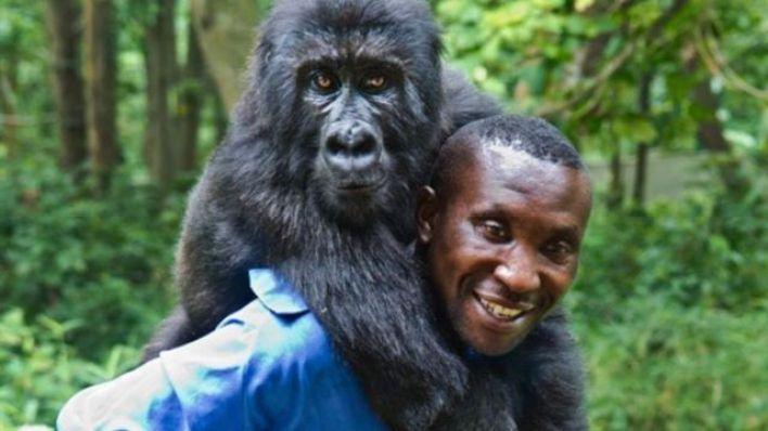 Dağ gorilleri ile onları yavruyken kurtaran muhafızlar arasında derin bağlar kuruluyor