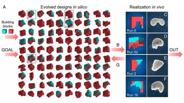Araştırmacılar robotların nasıl hareket ettiğini grafiklerle paylaştı