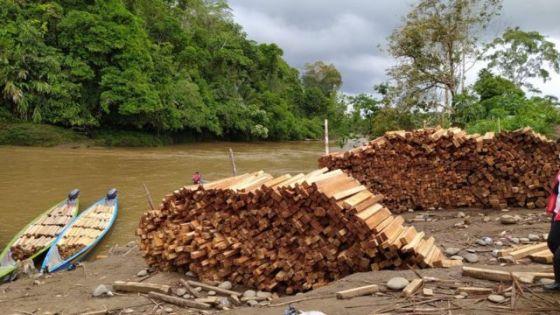 Madeira Balsa empilhada nas margens do rio Pastaza
