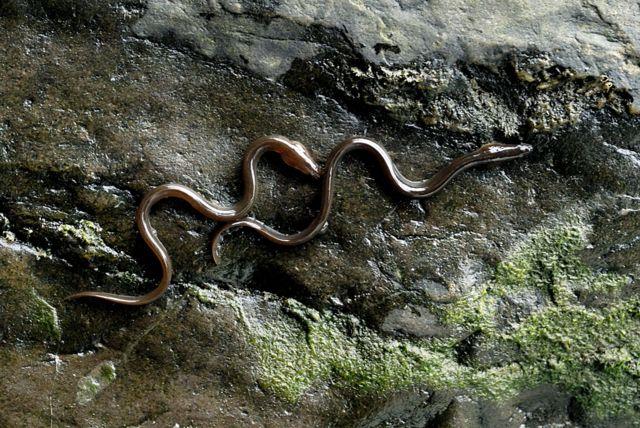Angulas escalando una pared en Gales.