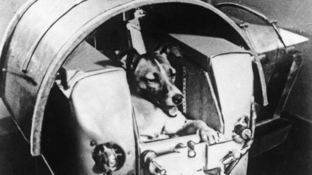 La perra Laika dentro de la cápsula en la que sería enviada al espacio.