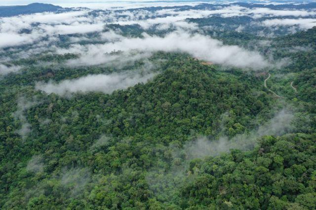 Tropical rainforest, Ecuador
