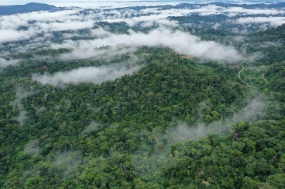 열대 우림, 에콰도르