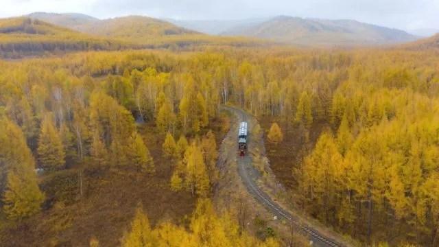 몽골 북방수림