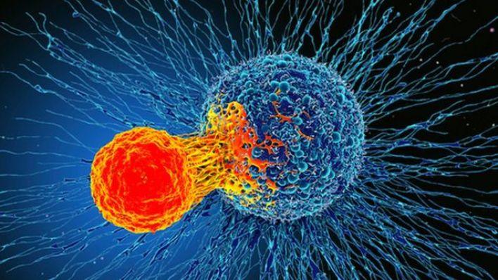 T hücreleri, kanserli hücrelere saldırırkeni sağlıklı hücrelere zarar vermiyor.