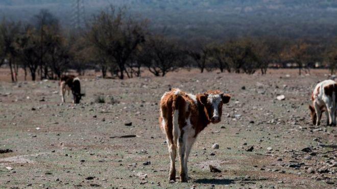 Megasequía en Chile: la disputa por la propiedad del agua en medio de la mayor sequía de la que se tiene registro
