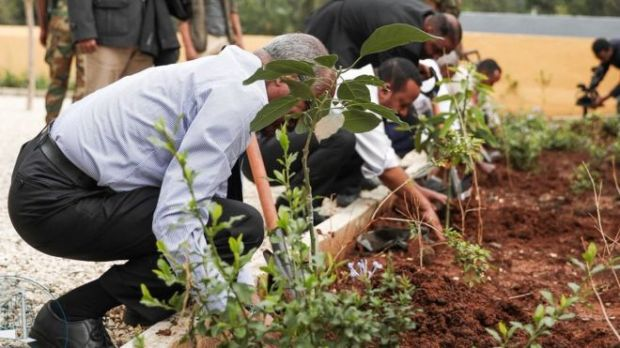 Image result for Ethiopia plants 350 million saplings in 12 hours, breaks world record